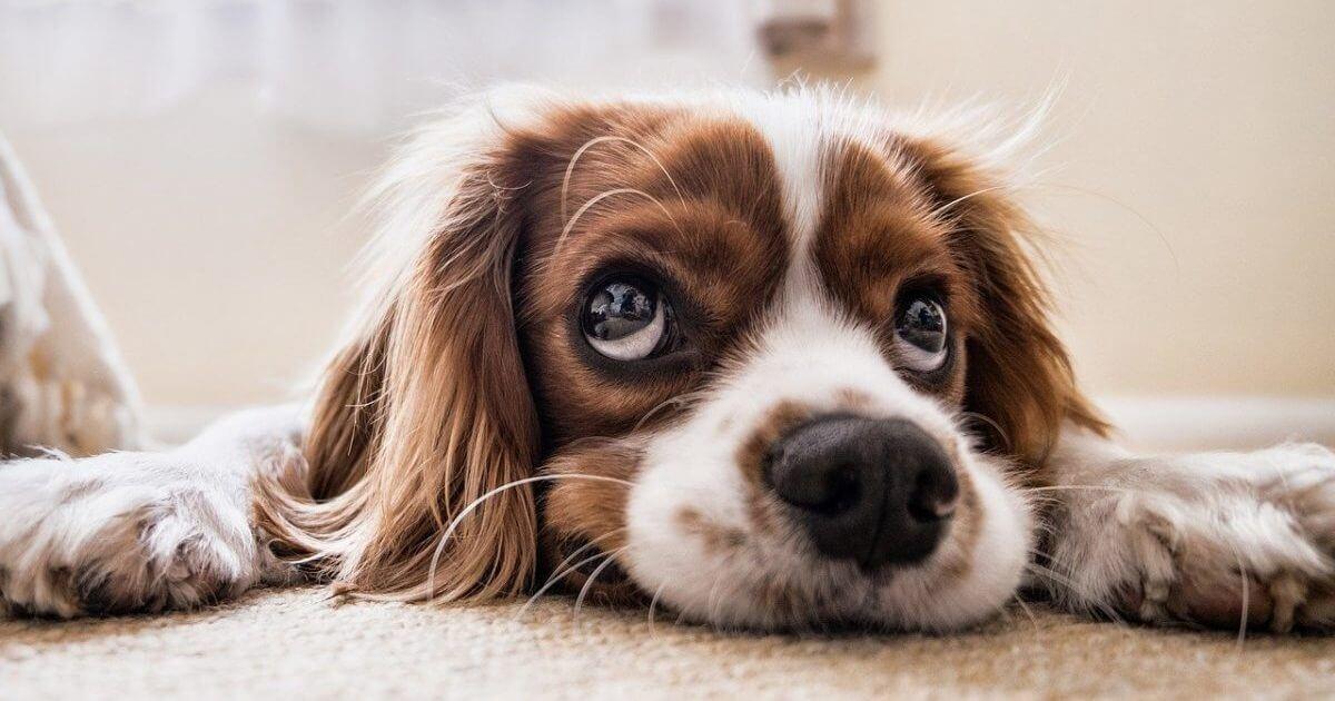 犬好きのためのおすすめ商品